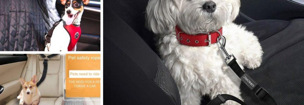 cinturon-perro-para-coches