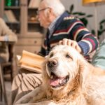 Accesorios de viaje para perros y mascotas