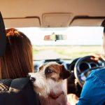 Fundas de Asiento de Coche para Mascotas
