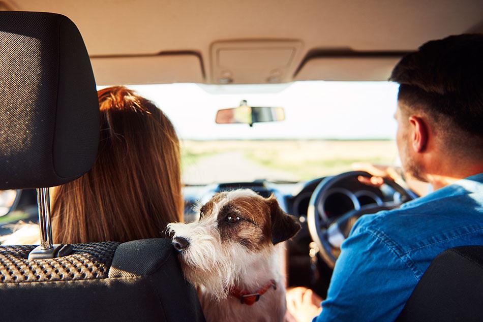 mejores-fundas-para-asiento-perro